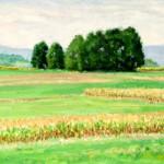 Red Corn, Oil on panel, 10 x 20