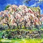 """A. John Kammer, <i> Cherry Trees, Philadelphia Art Museum</i><br>  Oil on canvas 30"""" x 40"""""""