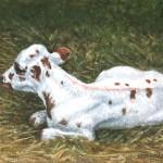 Longhorn Calf I,  Oil on Canvas 8 x 10