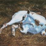 Longhorn Calf II,  Oil on Canvas 8 x 10