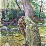 Loyalhanna Creek with Ild Tree